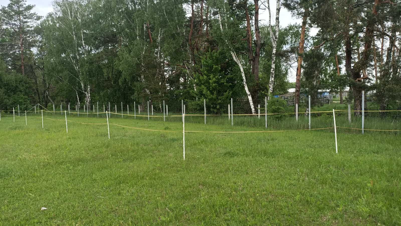 дерева висаджені Рабен Україна